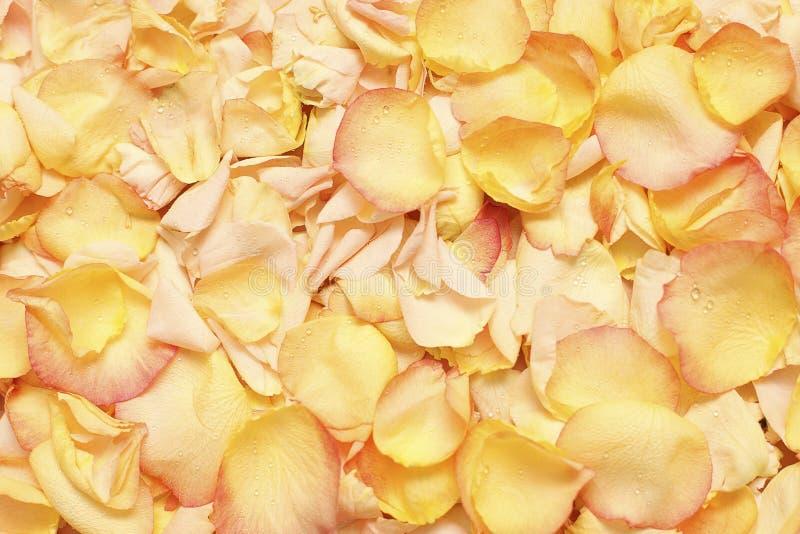 Download Rose Petals - Background Stock Photos - Image: 22077803