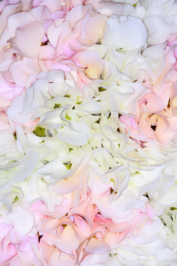 Rose petals background. Light pink and white colors royalty free stock photos