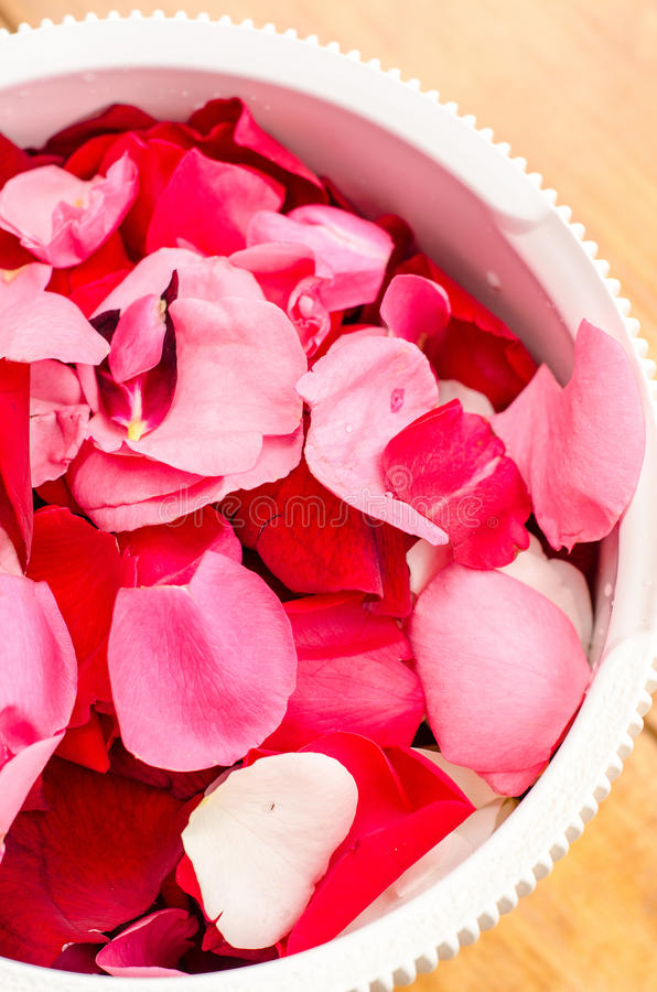 Download Rose petals stock image. Image of white, chinensis, syrup - 31837559