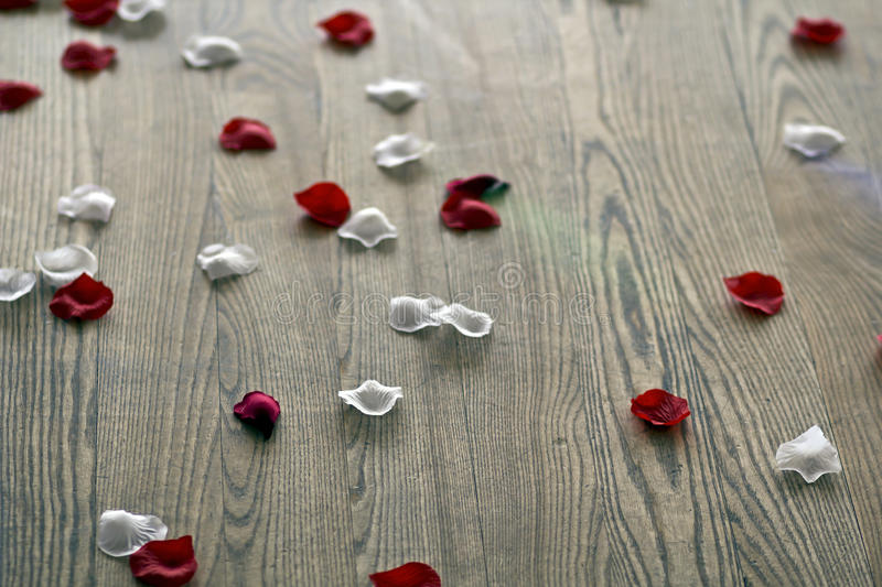 Rose petals 2 royalty free stock images