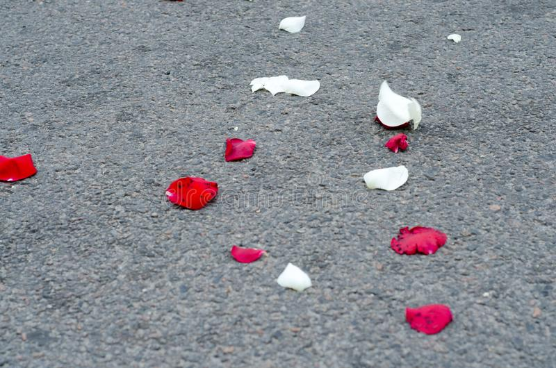 Rose petals on the floor. Wedding tradition of showering newlyweds with rose petals when they come out of the church. royalty free stock images
