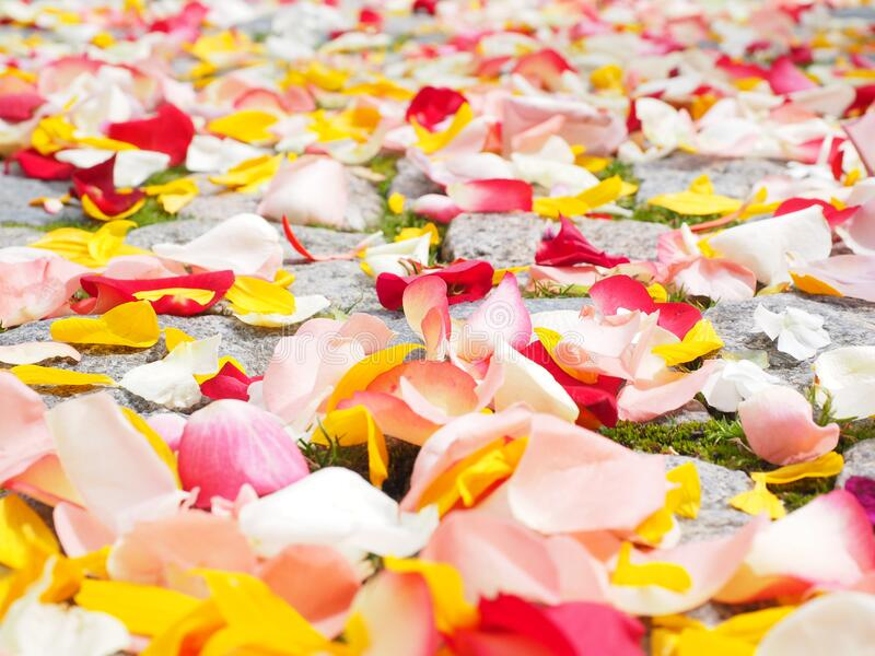 Rose petals on garden stones stock image