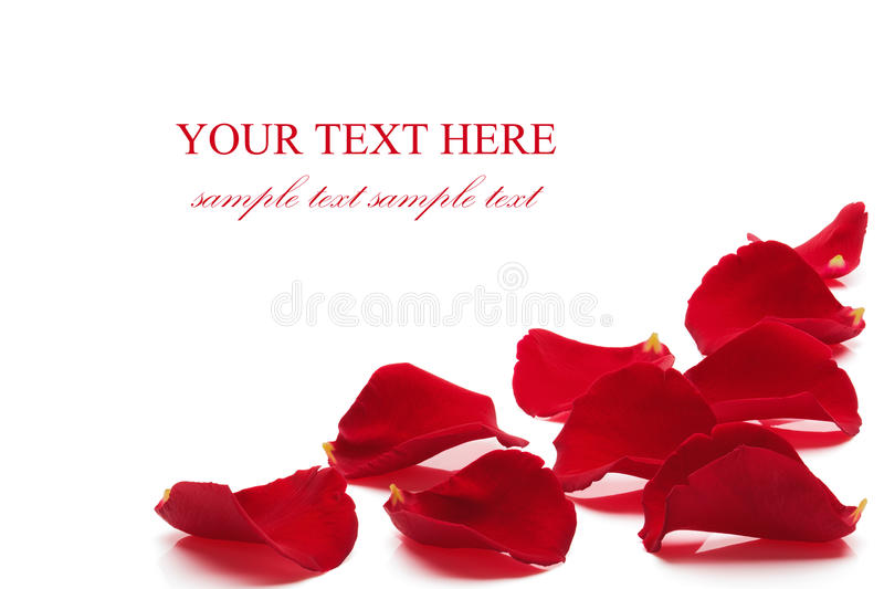 Rose petals. Rose petals, isolated on the white background, clipping path included royalty free stock images