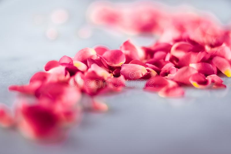 Rose petals on marble stone, floral background royalty free stock photography