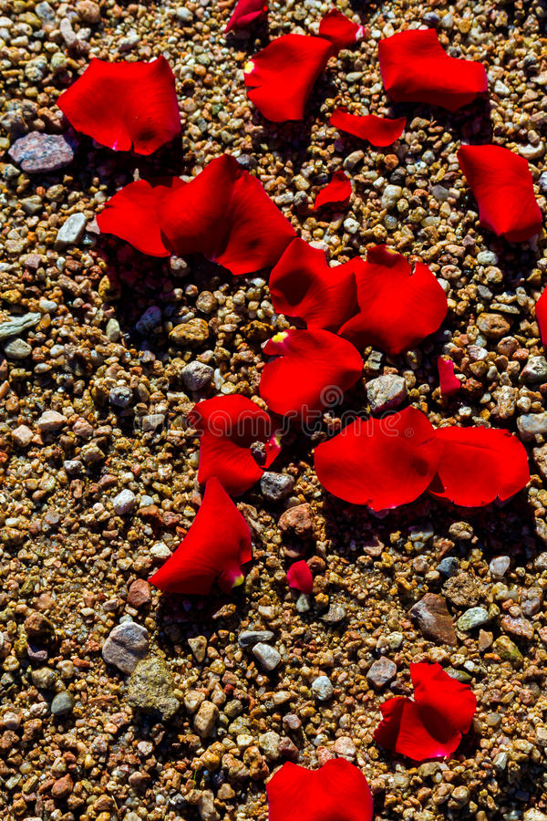 Rose Petals On Pebbles. Red rose pebbles lay on a rocky shore of a lake during a memorial service stock photo