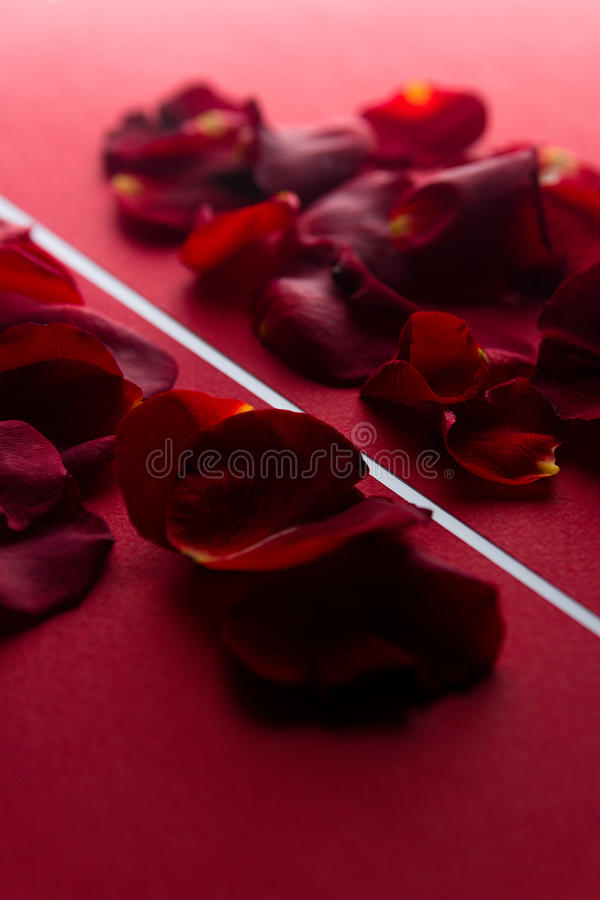 Download Rose Petals In Red With A White Stripe Stock Image - Image: 83715601