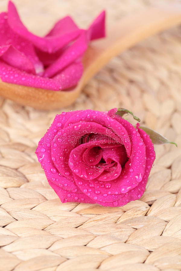 Rose-petals and rose stock images