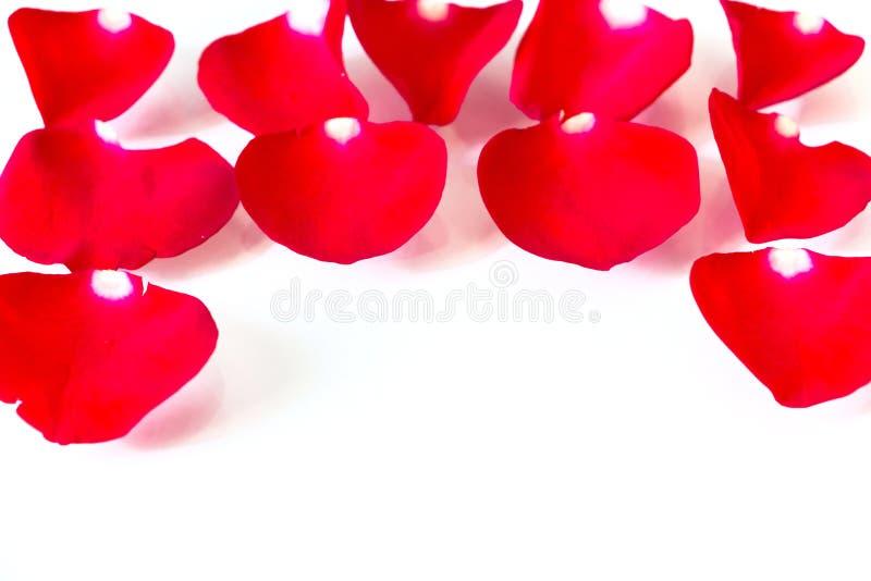 Rose Petals rouge à l'arrière-plan blanc photographie stock libre de droits