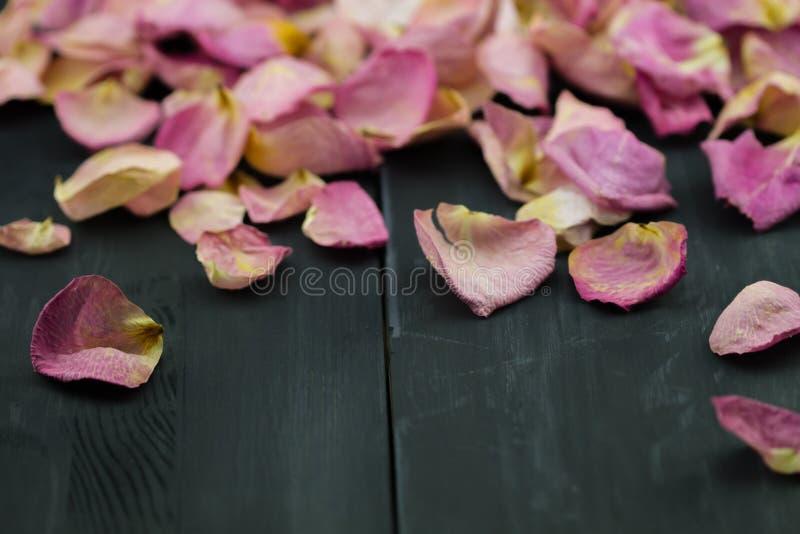 Rose Petals sèche photo stock
