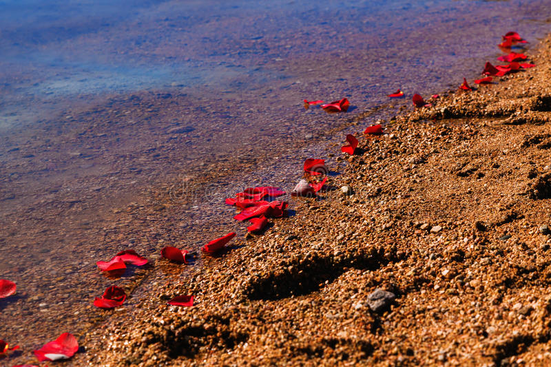 Rose Petals On Shoreline. Rose petals that washed up on a shoreline after a memorial service and spreading ashes of a loved one stock image