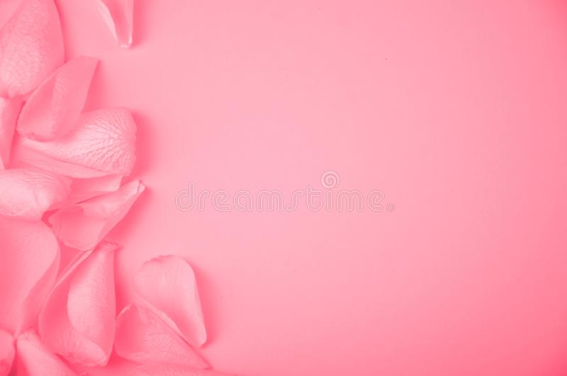 Rose petals on solid color paper background romantic template with place for text. Image stock image