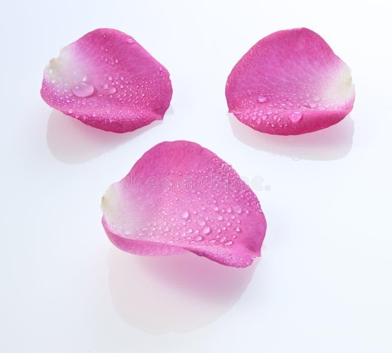 Free Rose Petals Water Drops Stock Image - 30678711