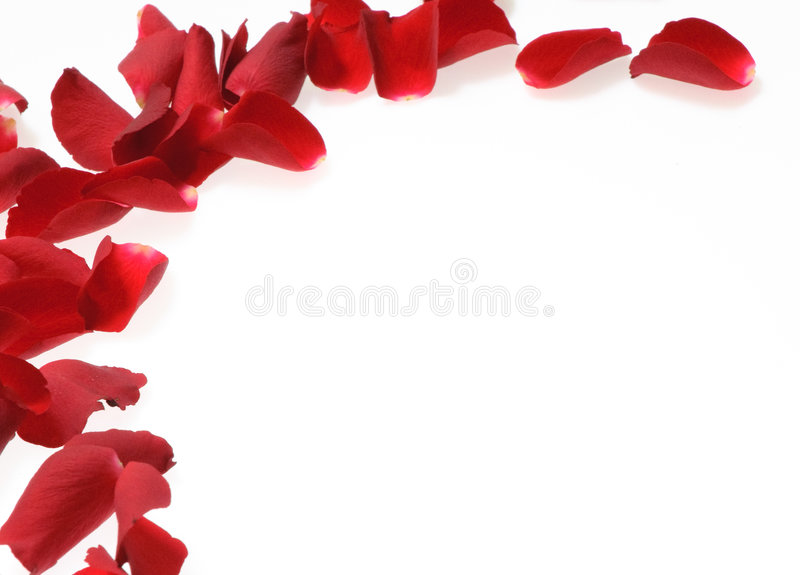 Rose petals on white background stock photos