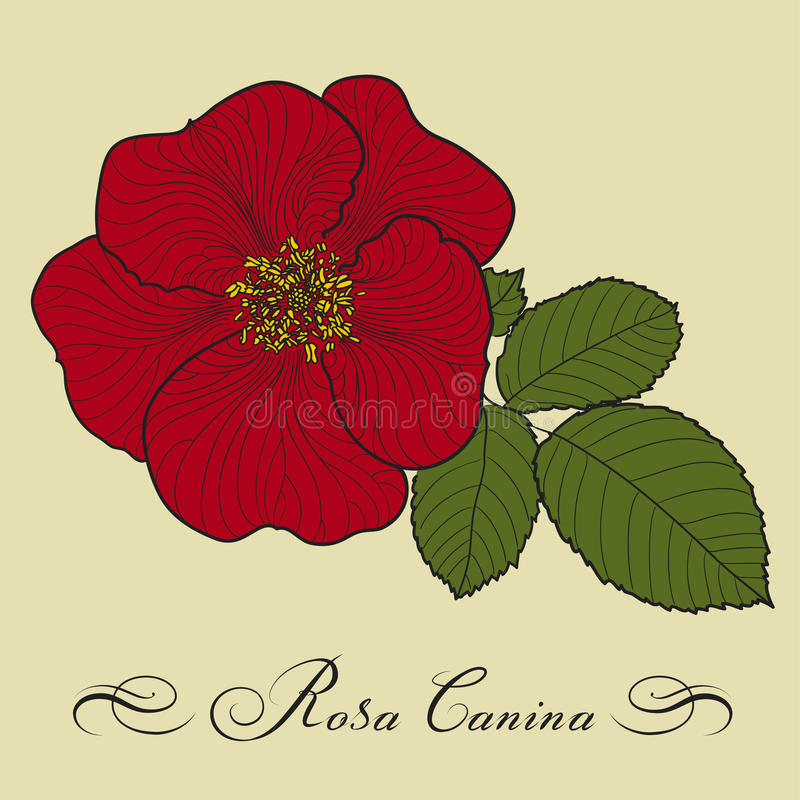 rose pies obraz stock
