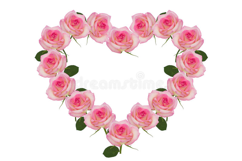 Rose pink flowers of the heart stock photo image of love pink download rose pink flowers of the heart stock photo image of love pink mightylinksfo