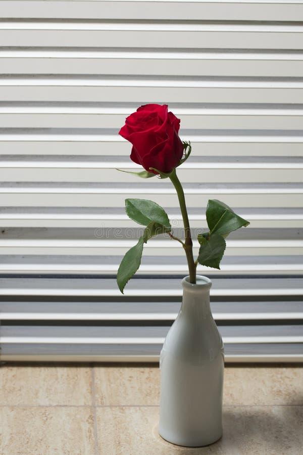 Rose por la ventana imagen de archivo
