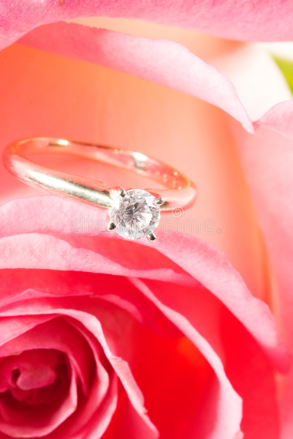 Download Rose Present With A Surprise Royalty Free Stock Images - Image: 1701369
