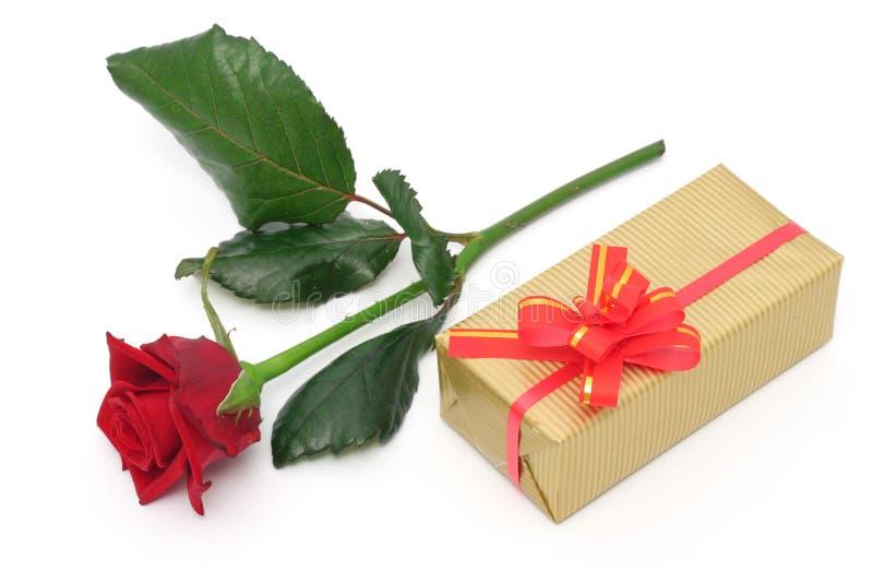 rose prezent zdjęcie royalty free