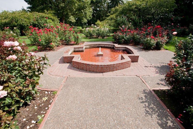 rose prov för trädgårds- international royaltyfria foton