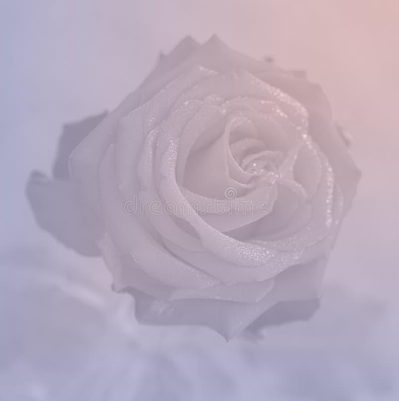 rose quartz and serenity rose background stock photo image 68823050. Black Bedroom Furniture Sets. Home Design Ideas