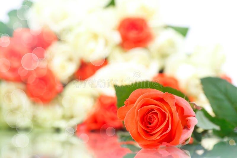 Rose Red foto de stock royalty free
