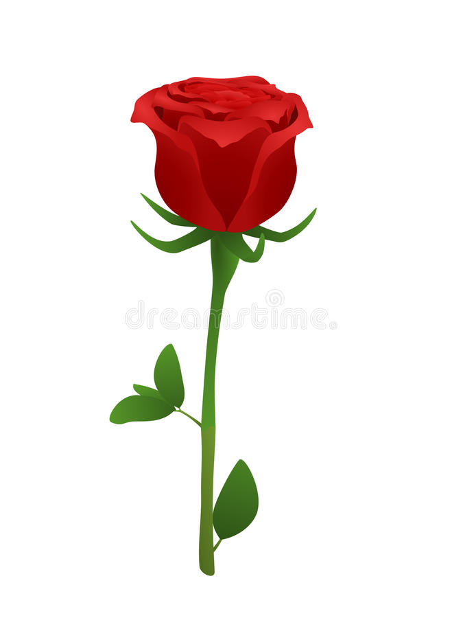 Rose stock illustration