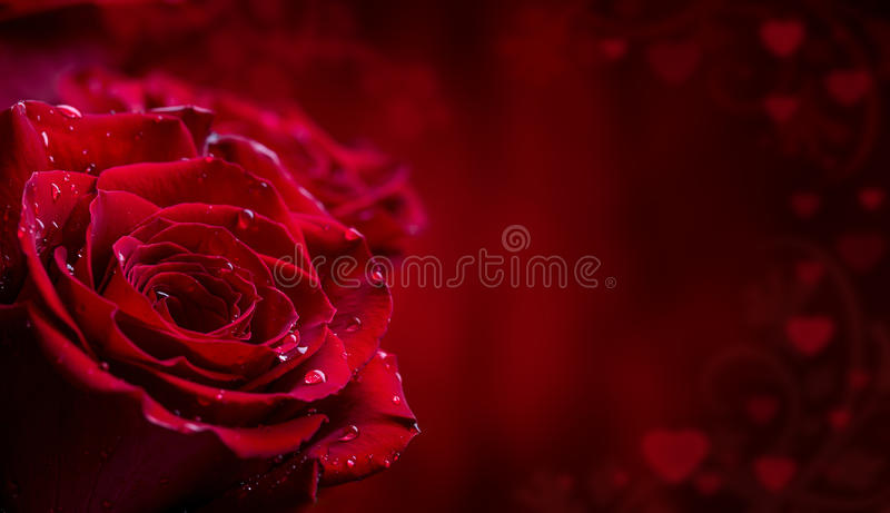 Rose. Red roses. Bouquet of red roses. Several roses on Granite background. Valentines Day, wedding day background. royalty free stock photos