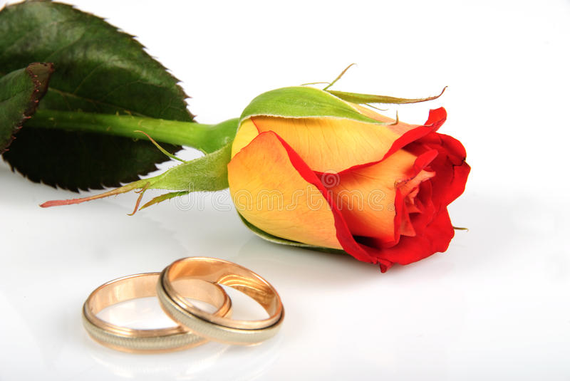 Rose and rings. Isolated on white background. Wedding postcard stock photo