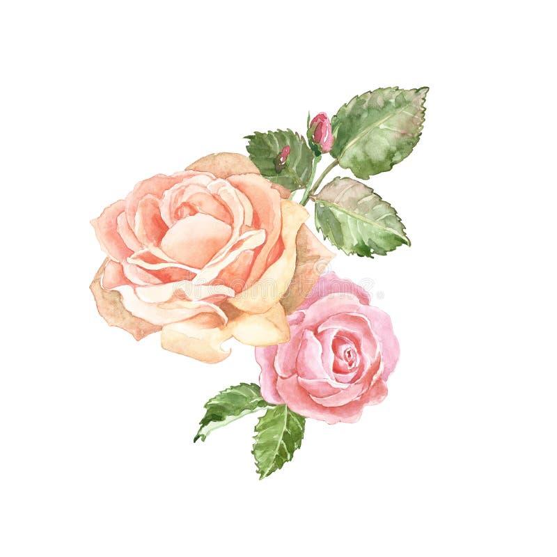 Rose rosa delicate disposizione dell'acquerello, isolata su fondo bianco Bella composizione nei fiori nello stile d'annata illustrazione vettoriale