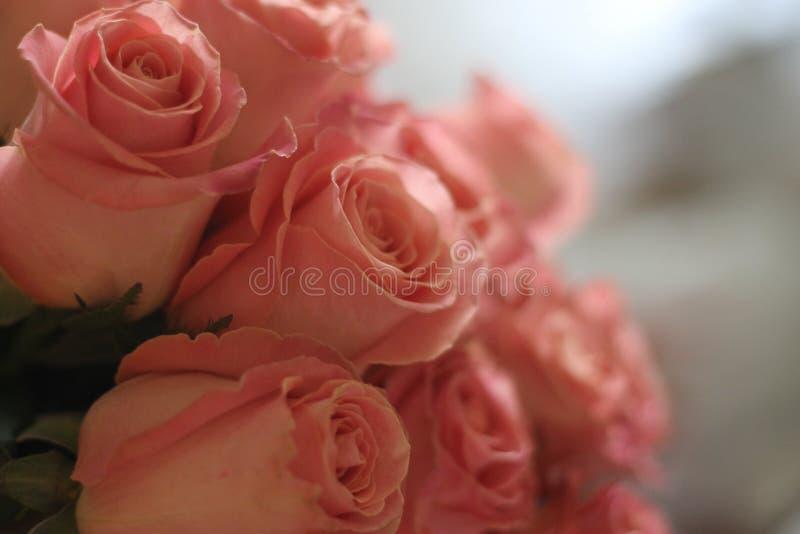 Rose rosa, molte, offerta, bella, per le donne fotografie stock