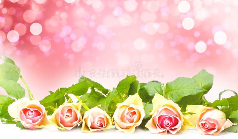 Rose rosa prima di Bokeh, San Valentino della cartolina d'auguri immagine stock