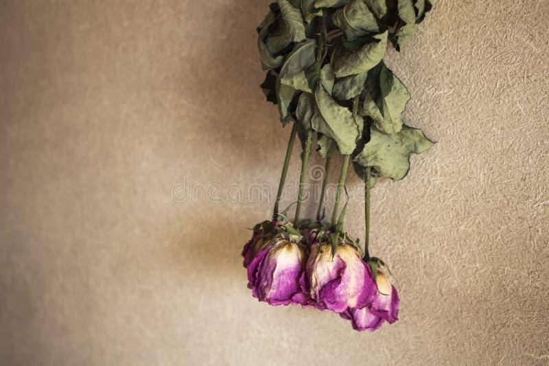 Rose rosa secche sulla parete fotografia stock