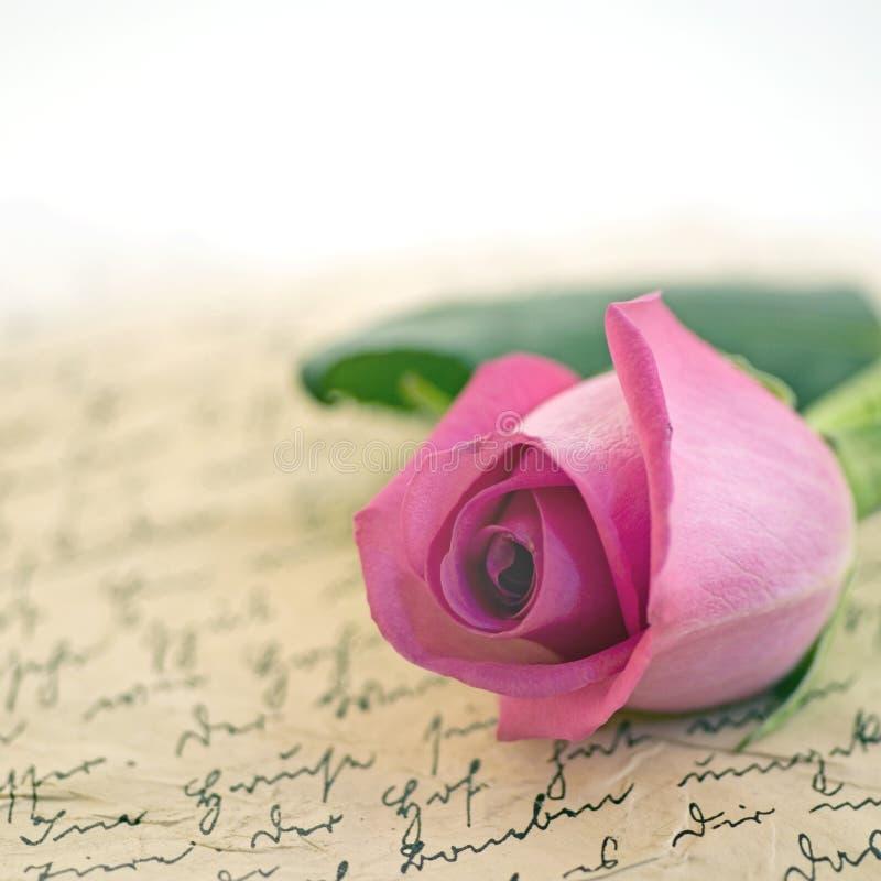 Rose rosada foto de archivo libre de regalías