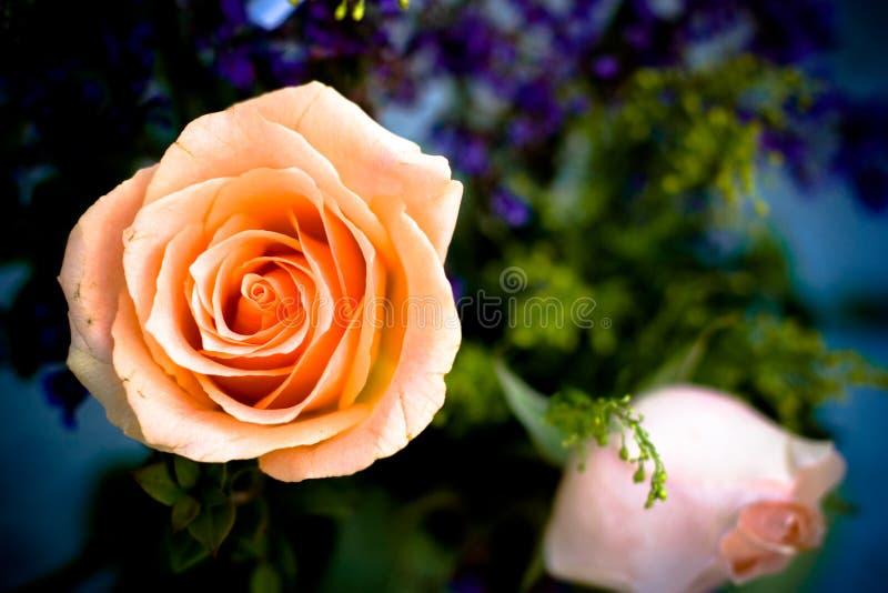 Rose rose image stock