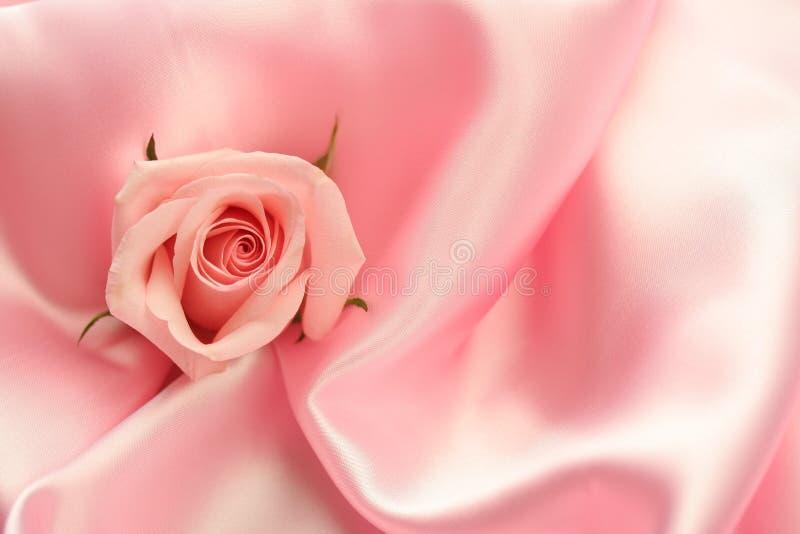 Rose rose sur le satin rose photos libres de droits