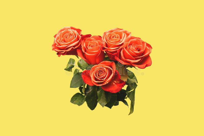 Rose rosse con i grandi germogli e foglie verdi su un fondo giallo Il concetto di arte Mazzo d'avanguardia delle rose creativo fotografie stock libere da diritti