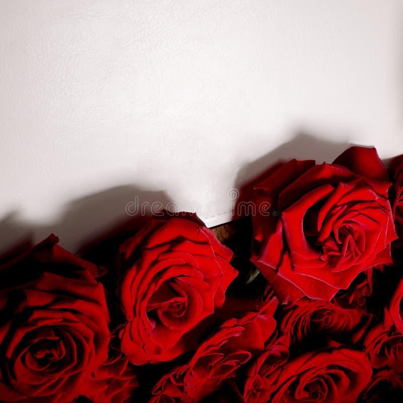 Rose rosse con il libro bianco fotografie stock libere da diritti