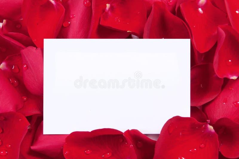 Rose rosse con la scheda in bianco immagine stock libera da diritti