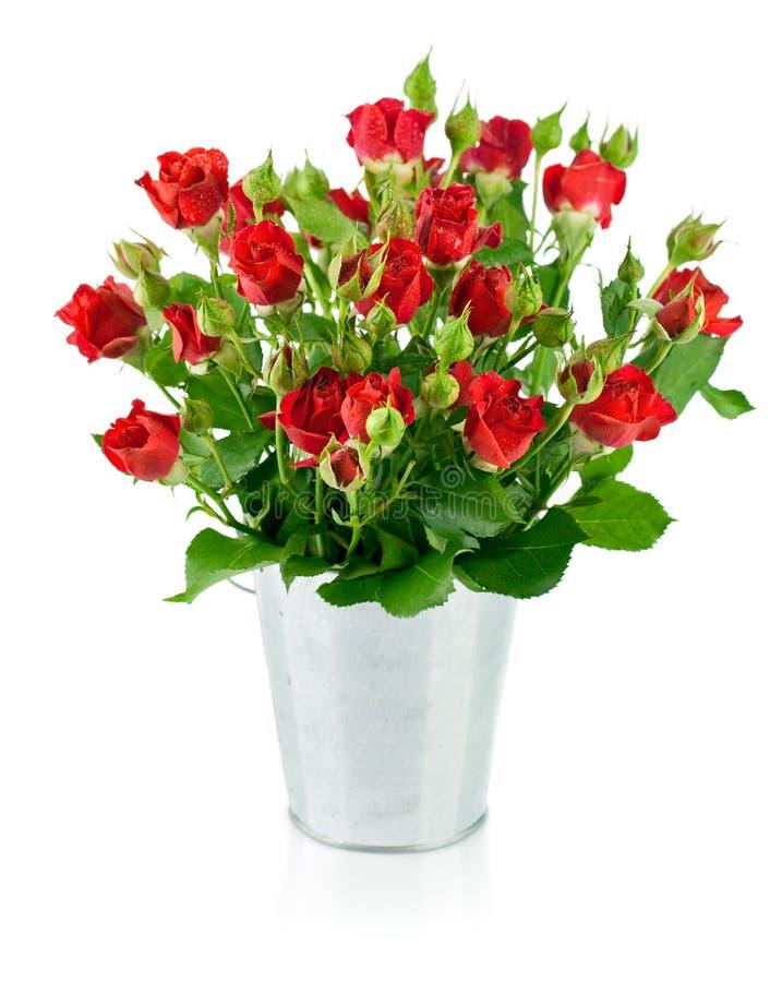 Rose rosse con le foglie verdi fotografie stock