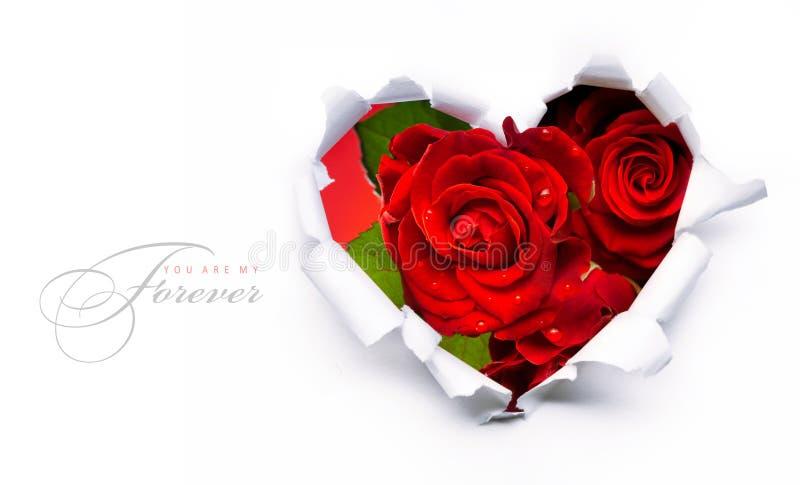 Rose rosse di giorno del biglietto di S. Valentino della bandiera e cuore di carta immagini stock libere da diritti