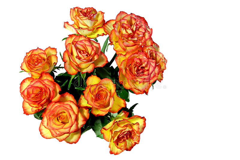 Rose rosse ed arancioni fotografie stock
