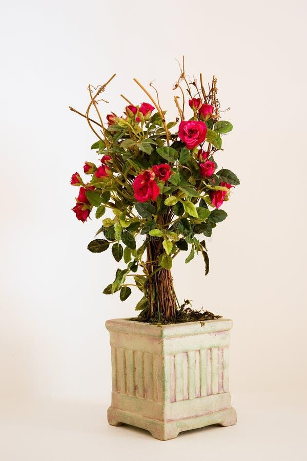 Rose rosse miniatura in un POT   immagine stock