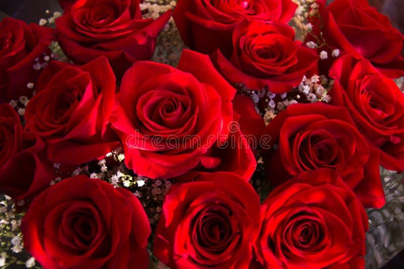 Rose rosse, sensibilità fresche fotografie stock