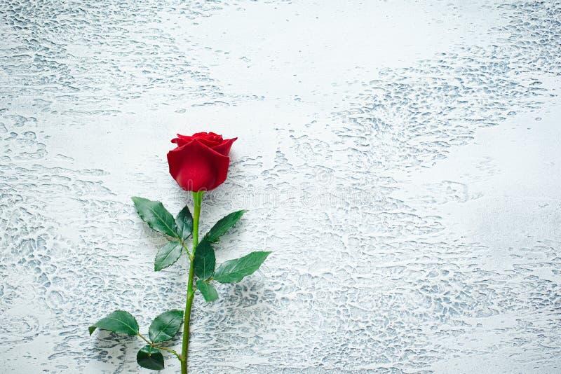Rose rosse su un fondo strutturato leggero Posto per testo, vista superiore immagini stock libere da diritti