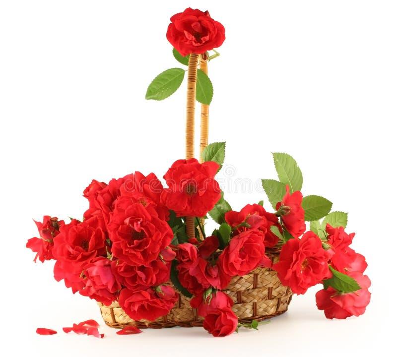 Rose rosse in un cestino. fotografia stock libera da diritti