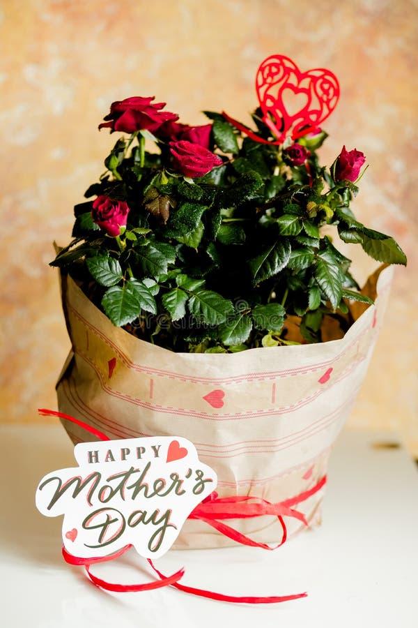 Rose rosse in vaso sulla tavola bianca e sul fondo giallo Pianta in vaso in pacchetto di festa Generi i regali del giorno del ` s fotografia stock