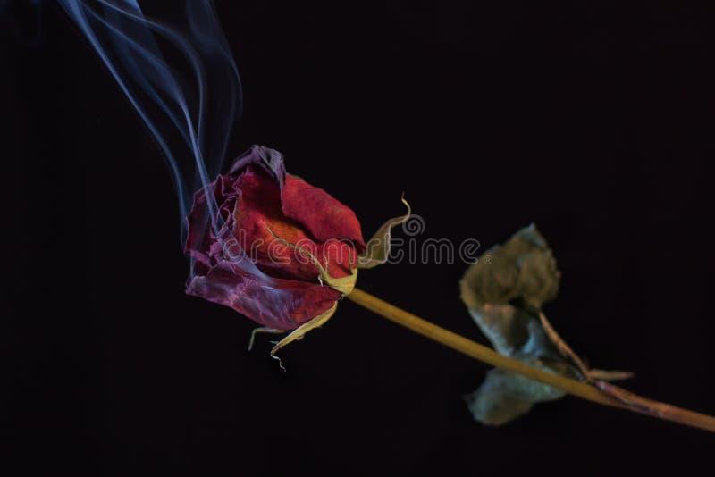 Rose rouge de fumage photographie stock libre de droits