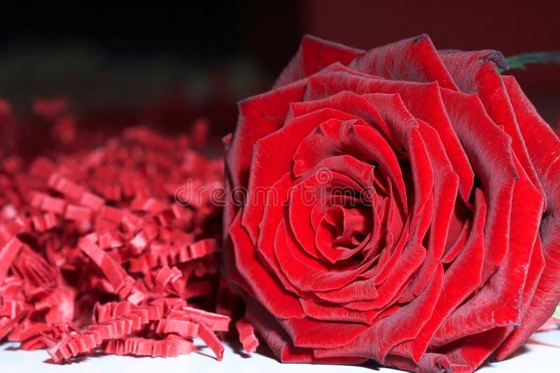 Rose rouge - Rose par coeur photographie stock libre de droits