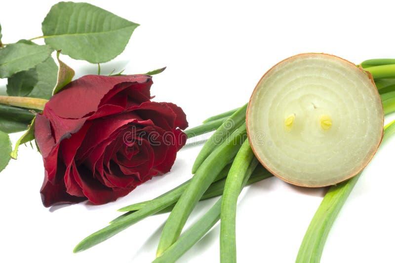 Rose rouge simple à l'oignon frais coupé en tranches photos stock