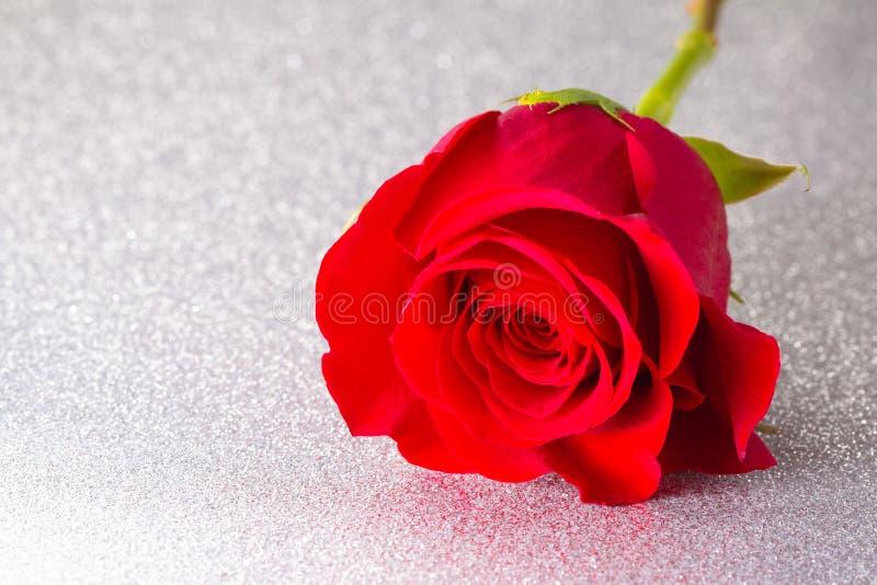 Rose rouge simple sur un Tableau argenté images libres de droits